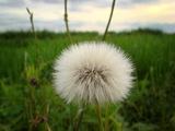 野の花種08.05.25.jpg