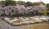 区民農園2011.04.11