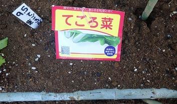 てごろ菜種蒔き2019.09.05