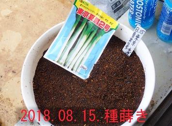 東京夏黒2号2018.08.15