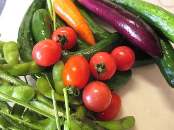 夏野菜収穫開始2015.06.20