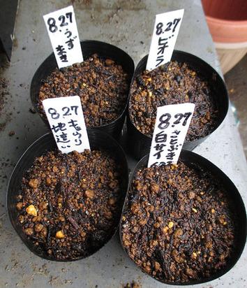 種蒔き2014.08.27.jpg