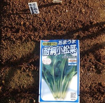 小松菜種蒔き2019.09.11