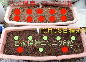 ニンニク種蒔き2017.10.08