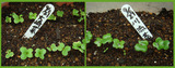 折り菜2012.10.04