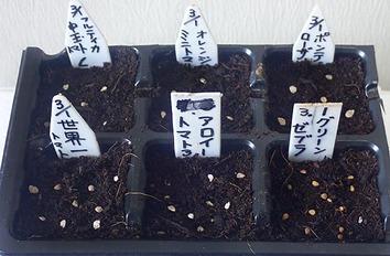 トマト追加蒔き2020.03.01