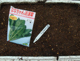 ななちゃんホウレンソウ2012.10.27