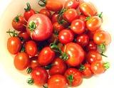 ミニトマト08.07.24.jpg