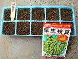 エダマメ種まき2010.04.04.jpg