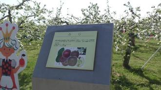 りんご公園5