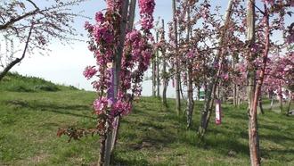 りんご公園30