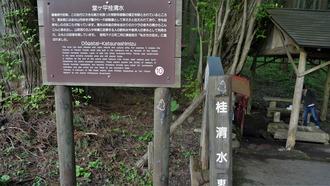 16-清水・燈明杉1 (7)