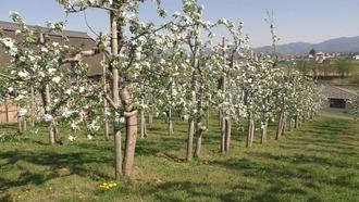 りんご公園23