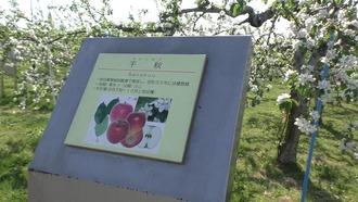 りんご公園6