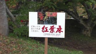 もみじ山31