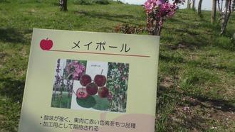 りんご公園29