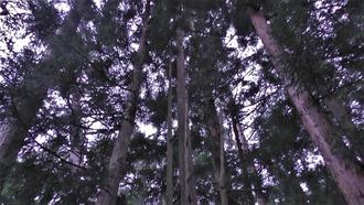 14-大石神社 (46)
