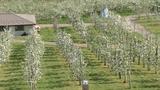 りんご公園18