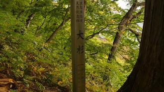 もみじ山12