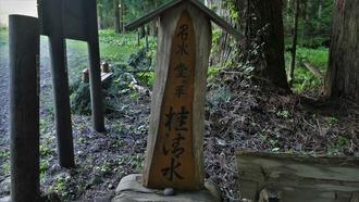 16-清水・燈明杉1 (6)
