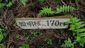 16-清水・燈明杉1 (16)