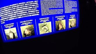 龍泉洞12