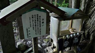 16-清水・燈明杉1 (4)