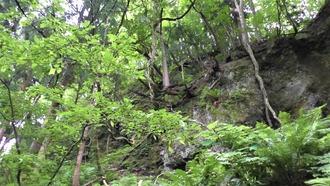 沢田神明宮5