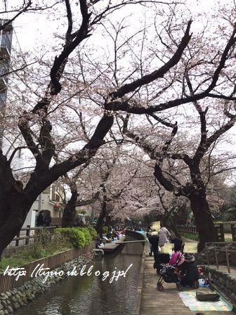 桜の下でも♪ ~森永製菓「ビフィズス菌チョコレート」