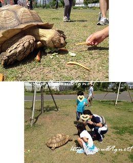 青空の下、動物と戯れてみた! @東京臨海広域防災公園
