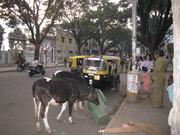 Jayanagarの町並み