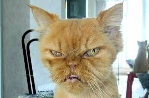 【動物】こんなに表情豊かな猫はじめて見たwww