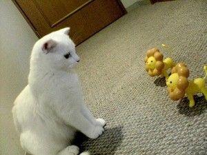 【動物】新米にものを教える猫