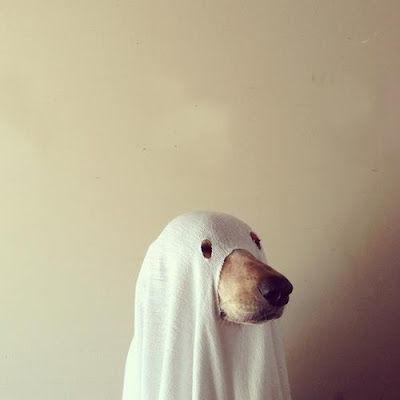 【動物】犬のハロウィーンコスチュームが可愛すぎる困った