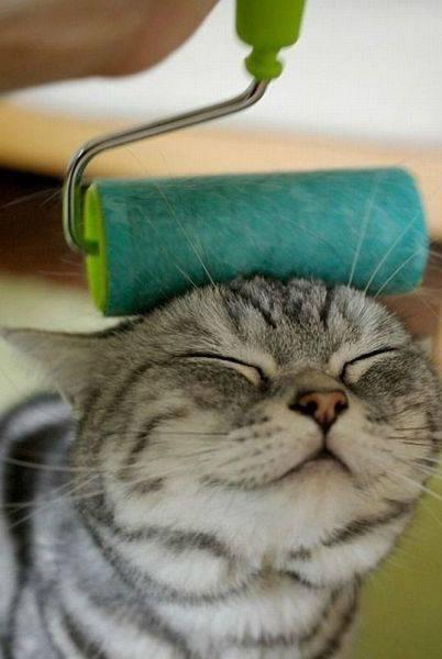 【動物】猫「あ、あぁぁぁ~そこ…」