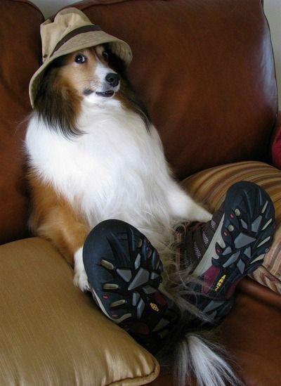 【動物】ワンダーフォーゲル犬