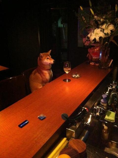 【動物】酒は嗜む程度に飲むよ