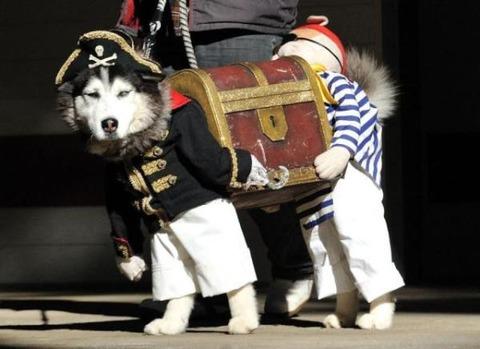 【動物】なんだこの犬用の服www