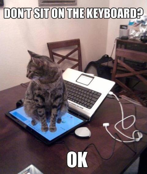 【動物】ネコ「キーボードの上に座るなって?OK」