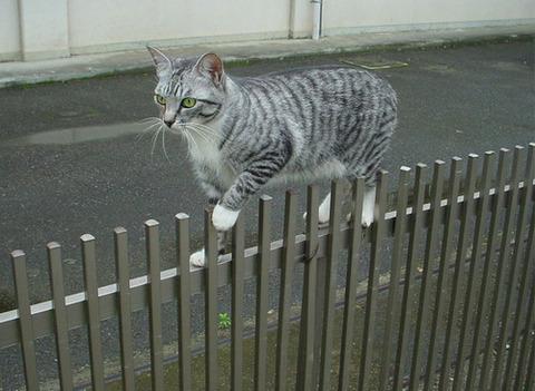【動物】猫って忍びだよな