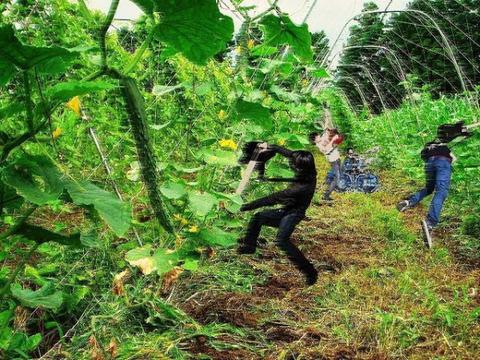 【おもしろ】9mmがきゅうり畑でライブしてる画像ください