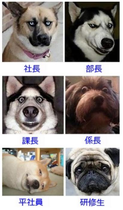 【社会】会社の役職って犬で例えるとこんな感じだよね