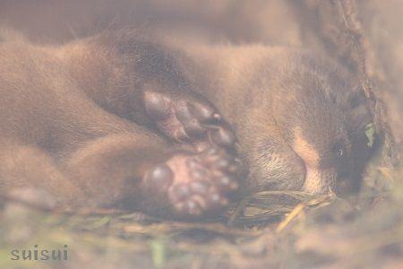 aquamarinefukushima otter baby 2