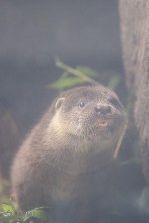 aquamarinefukushima otter child 9