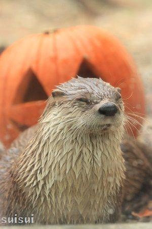morioka zoological park canadian otter 8