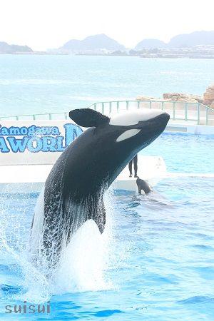 kamogawaseaworld orca 3