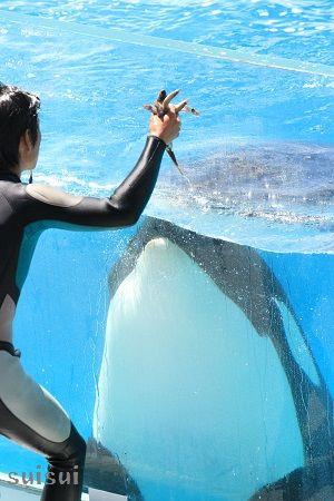 kamogawaseaworld orca 2