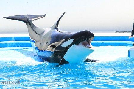 kamogawaseaworld orca 4