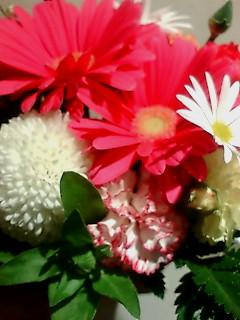 BD flower