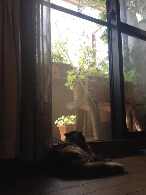 【血尿の老猫】膀胱ガンで亡くなりました。